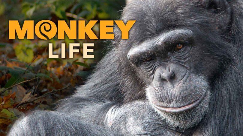 Monkey Life (1)
