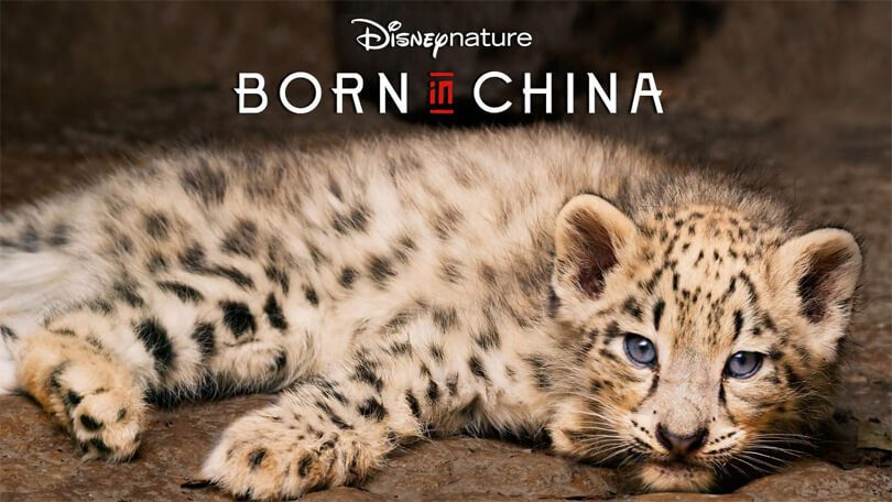 Born in China Netflix