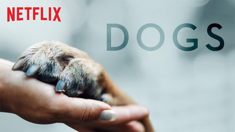 Dogs Netflix