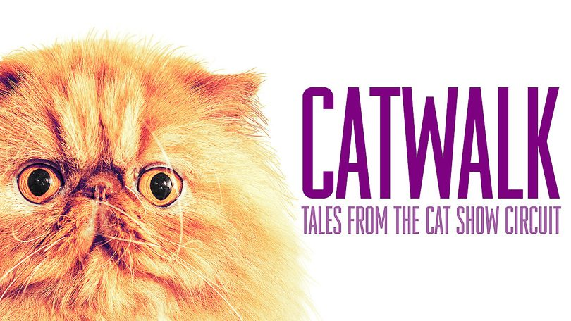Catwalk: Tales from the Cat Show Circuit Netflix