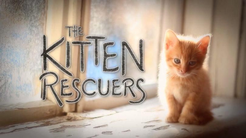 Kitten Rescuers Netflix