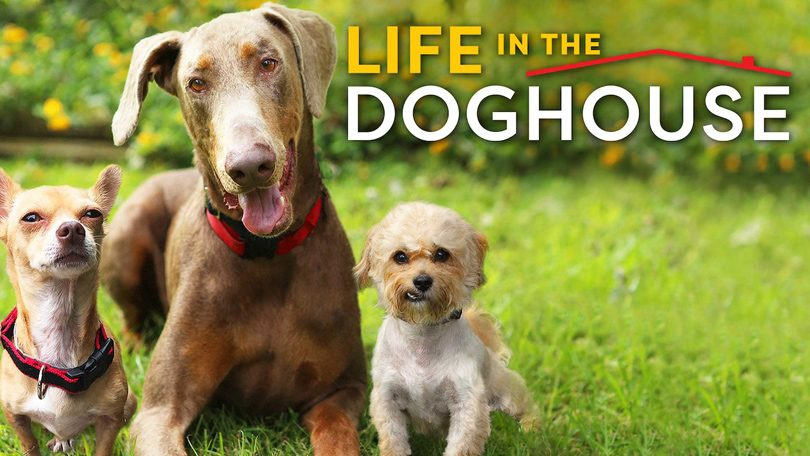 Life in the Doghouse Netflix