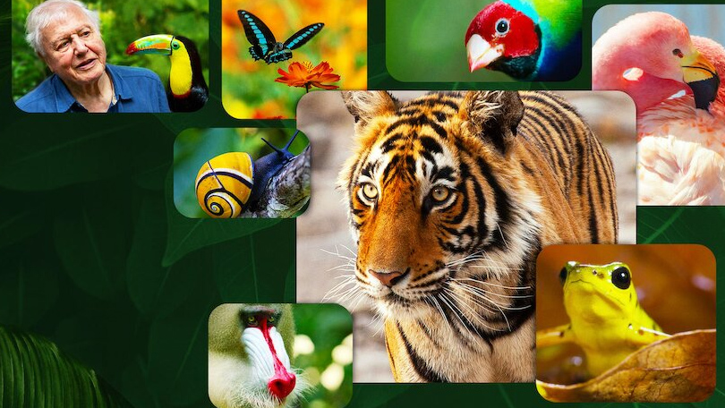 Life in Colour with David Attenborough Netflix