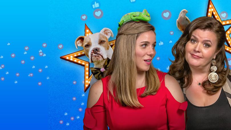 Pet Stars Netflix
